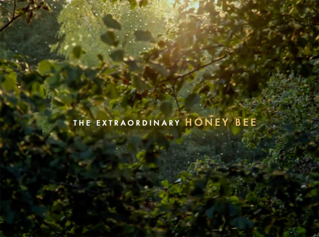 The Extraordinary Honeybee