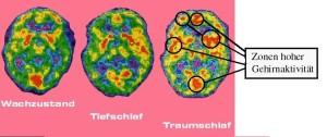 Realität, Gehirn, Traum